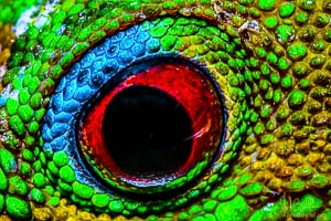 A 4x macro photo of a Gecko eye seeing me...